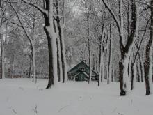 Québec - Bois de Coulonges