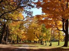 Québec ville - parc